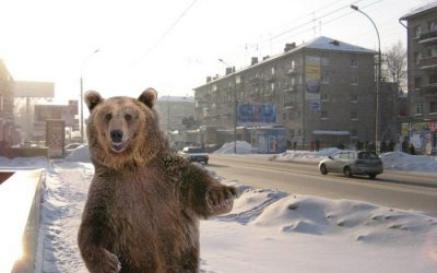 The origins of the Russian 'bear myth'